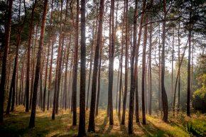 Nach dem Regen in den Wald