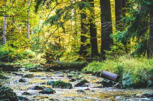 Goldener Herbst – Fotowalk im Schwarzwassertal