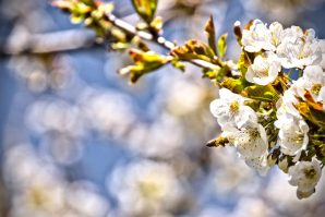 Frühlingsimpressionen – bearbeitet mittels Darktable